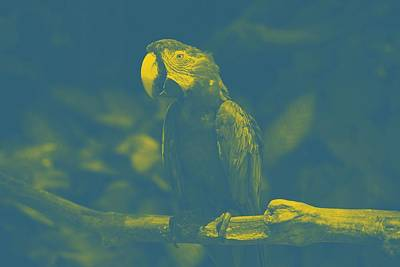 art Macaw 2 Poster