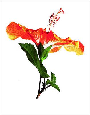 Art Orange Poster