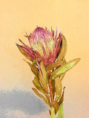 Artichoke Heart Flower Poster by Joseph Frank Baraba