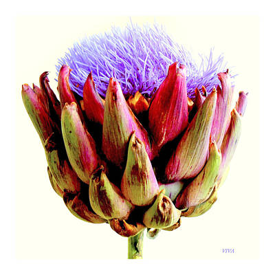 Artichoke In Bloom Poster