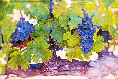 Artistic Grape Vines Poster by Garry Gay