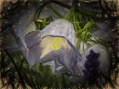 Artistic Painterly Campanula Persicifolia Poster by Leif Sohlman