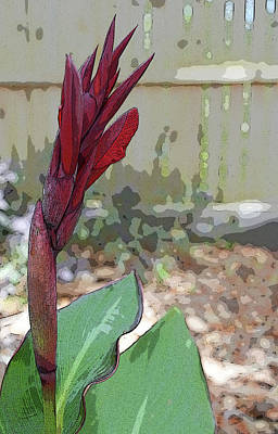 Artistic Red Canna Lily Poster