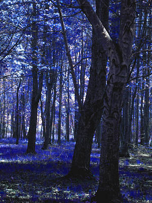 Poster featuring the photograph Artistic Tree In Blue by Michelle Audas