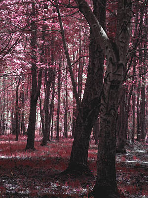 Poster featuring the photograph Artistic Tree In Pink by Michelle Audas