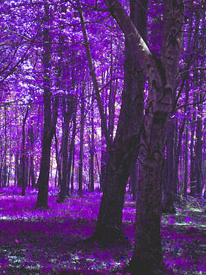 Poster featuring the photograph Artistic Tree In Purple by Michelle Audas
