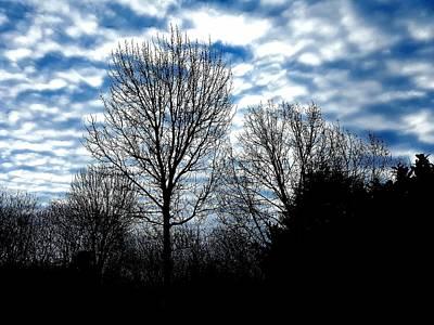 Ash Trees Against A Mackerel Sky Poster