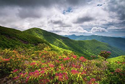 Asheville Nc Blue Ridge Parkway Spring Flowers North Carolina Poster