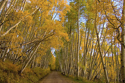 Poster featuring the photograph Aspen Alley by Steve Stuller