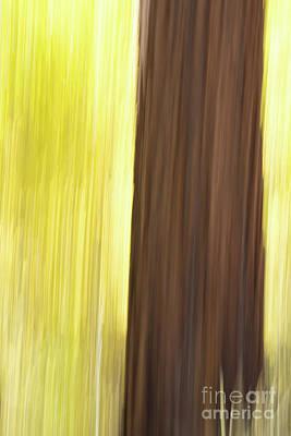 Aspen Blur #4 Poster