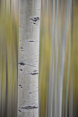 Poster featuring the photograph Aspen by Gary Lengyel