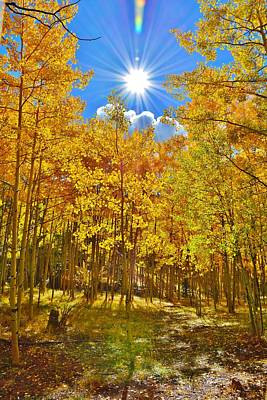 Poster featuring the photograph Aspen Grove Aglow by Diane Alexander