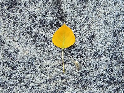 Aspen Leaf On Stone Poster