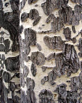 Aspen Scars Poster