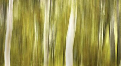 Aspens And Golden Foliage Abstract Poster