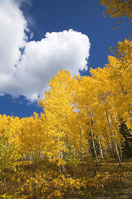 Aspens And Sky Poster by Ron Dahlquist - Printscapes