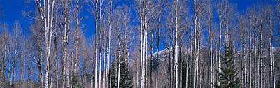 Aspens Az Poster by Panoramic Images