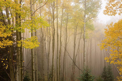 Aspens In Autumn 10 - Santa Fe National Forest New Mexico Poster