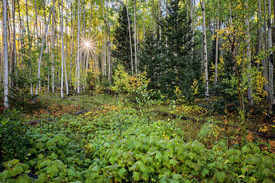 Aspens In Autumn 5 - Santa Fe National Forest New Mexico Poster