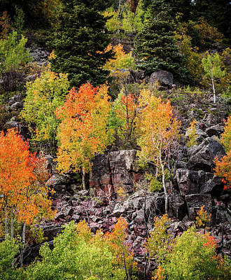Aspens In Autumn Colors Poster by TL Mair