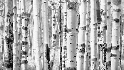 Poster featuring the photograph Aspens In Black And White  by Saija Lehtonen