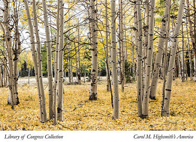 Aspens In Conejos County In Colorado, Near The New Mexico Border Poster by Carol M Highsmith
