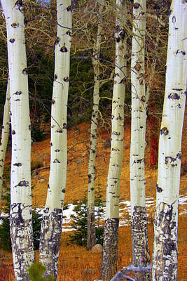 Aspens Of White Poster by Julie Lueders