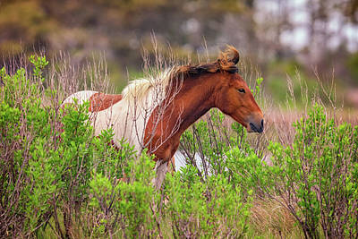 Assateague Pinto Poster by Rick Berk