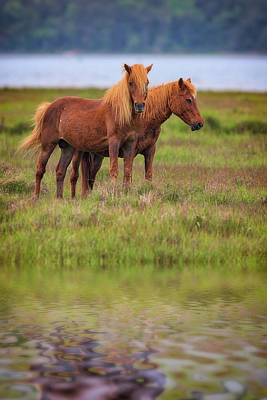 Assateague Ponies In The Marsh Poster by Rick Berk