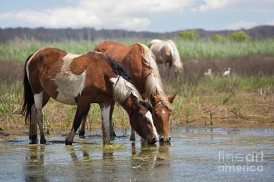 Assateague Ponies Tale Drink Poster