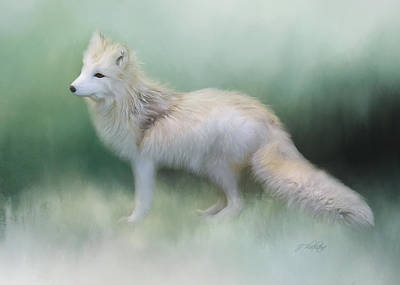 At The Centre - Arctic Fox Art Poster by Jordan Blackstone