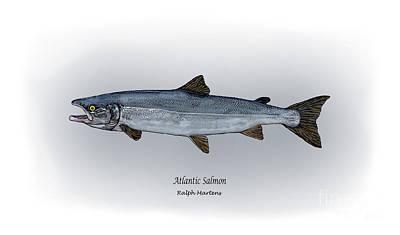 Atlantic Salmon Poster