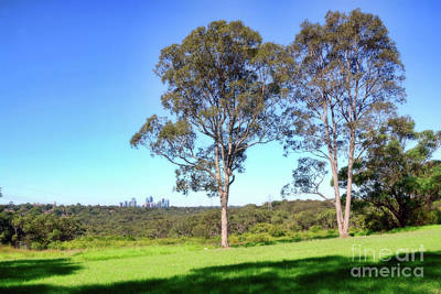 Poster featuring the photograph Aussie Gum Tree Landscape By Kaye Menner by Kaye Menner