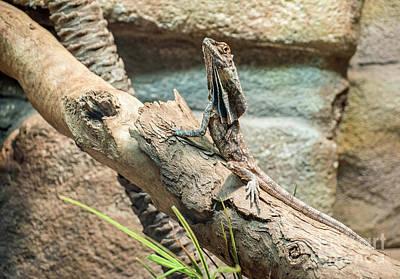 Aussie Lizard Poster