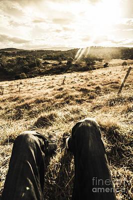 Australian Adventurer On Rural Holiday Poster