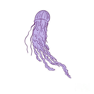 Australian Box Jellyfish Drawing Poster