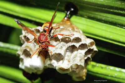 Australian Papper Wasp 772 Poster