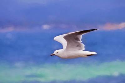Australian Seagull In Flight Poster by Michelle Wrighton
