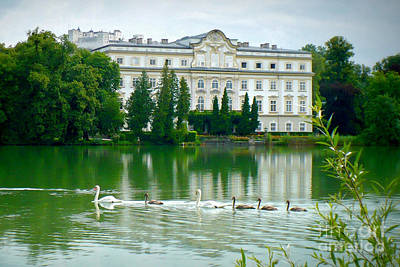 Austrian Chateau With Lake And Swans Poster by Carol Groenen