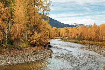 Autumn Aspen By The River Poster by Mary Jo Allen