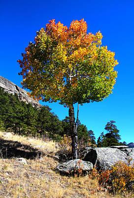Autumn Aspen Poster