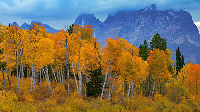 Autumn Aspens Below Mount Moran Poster by Joseph Rossbach