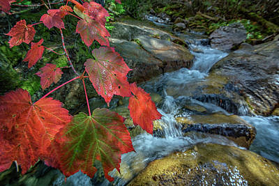 Autumn At Katahdin Stream Poster
