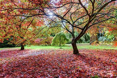 Autumn At Westonbirt Arboretum Poster