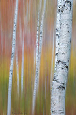 Poster featuring the photograph Autumn Birch Impressions by Expressive Landscapes Fine Art Photography by Thom