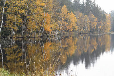 Autumn Birches On The Shore Of Lake Poster by Michal Boubin