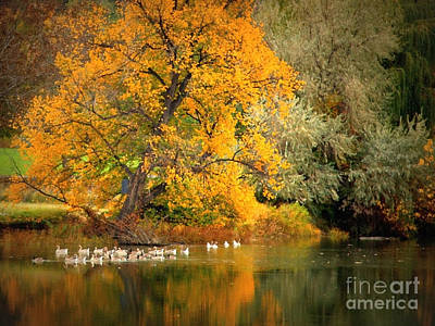 Autumn Calm Poster by Carol Groenen