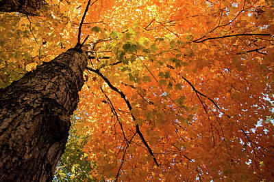 Autumn Canopy In Maine Poster