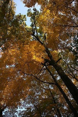 Poster featuring the photograph Autumn Canopy by Shari Jardina