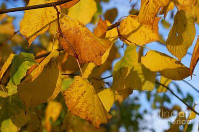 Autumn Poster by Carol Lynch